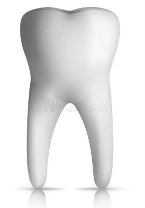 Dientes molares